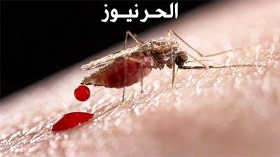 قصة عن البعوضة (موضوع عن البعوض)