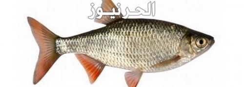 تفسير حلم تنظيف السمك 2019