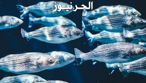 تفسير حلم السمك في المنام وصيده و طبخه واكله بالتفصيل