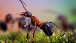 تفسير حلم النمل في المنام على الجسم في المنام