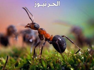 النمل والصراصير في المنام بالتفصيل