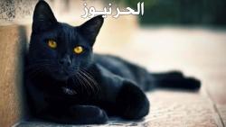 تفسير حلم ورؤية القط الاسود بالمنام
