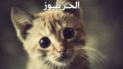 هل القطط تنسى اولادها واصحابها ؟؟