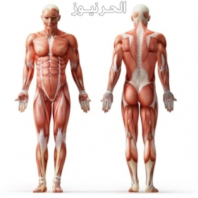 افضل كريم عضلاتوزيادة الوزن