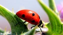 هل تعلم عن الحشرات قصير للإذاعة المدرسية