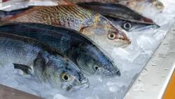عدد السعرات الحرارية في المأكولات البحرية