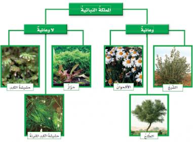 بحث عن النباتات اللاوعائية والوعائية