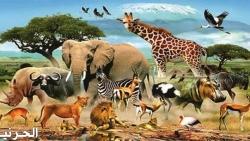 هل تعلم عن الحيوانات بالصور