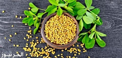 فوائد نبات الحلبة والقرفة والزنجبيل