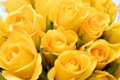 تفسير حلم الورد الاصفر في المنام