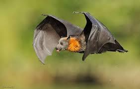 تفسير حلم الوطواط في المنام