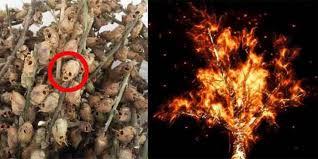 ما هي الشجرة الملعونة في القران ومن هو اول من يقرع باب الجنة