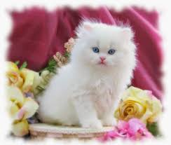 اسماء قطط جميلة وكيوت 2020