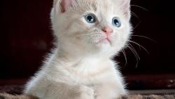 تفسير رؤية القطط الصغيرة في المنام