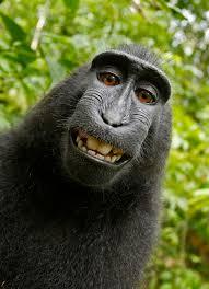 تفسير حلم المشي مع القرود والدفاع عنهم في المنام