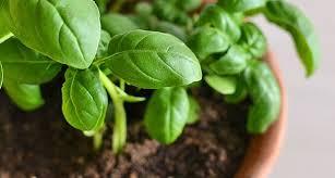 تفسير حلم زراعة النباتات في المنام