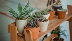 تفسير حلم نباتات الزينة في المنام