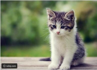 تفسير حلم الهروب من القطط في المنام