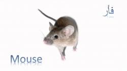 تفسير حلم الفأر الأحمر في المنام