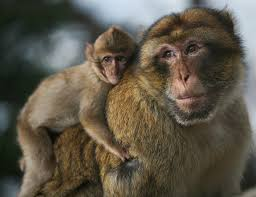 تفسير حلم عضة القرد في المنام