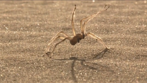 تفسير حلم قتل العنكبوت في المنام 15