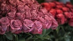 تفسير حلم الورد الأبيض في المنام