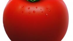 تفسير رؤية نواه الطماطم البندورة في المنام