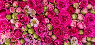 تفسير رؤية الورد بألوانه في الحلم