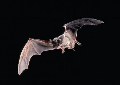 تفسير حلم وقوف الخفاش فوق رأس إنسان في المنام