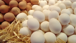 تفسير رؤية البيض بكافة اشكاله في الحلم