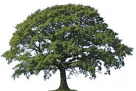 تفسير حلم شجرة في المنام