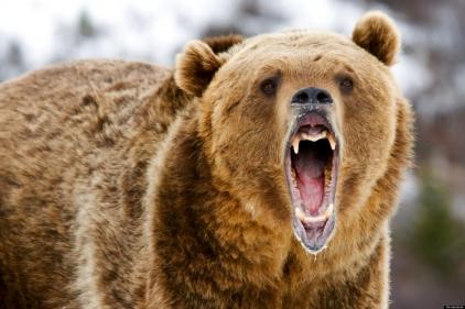 تفسير حلم الدب الكبير في المنام