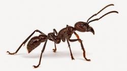 تفسير حلم النمل على الجسم في المنام