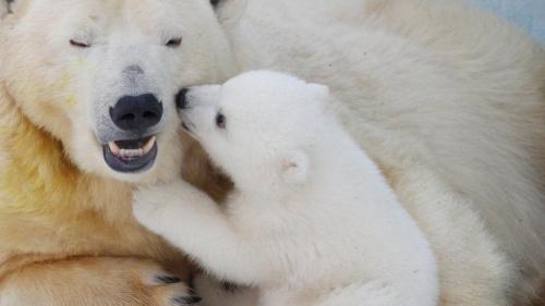 تفسير حلم هجوم الدب في المنام