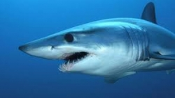 تفسير حلم صيد سمك القرش في المنام