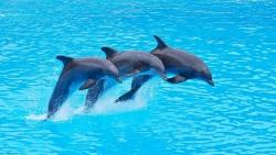 تفسير حلم إطعام الدلفين في المنام