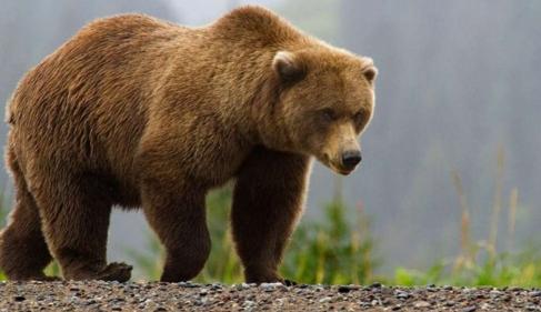 تفسير حلم موت الدب في المنام