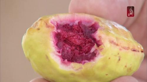 تفسير حلم كوكتيل الفواكه في المنام