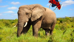 تفسير حلم صيد الفيل في المنام