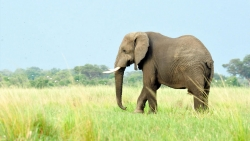تفسير حلم السير مع الفيل في المنام