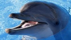 تفسير حلم السباحة مع الدلفين في المنام