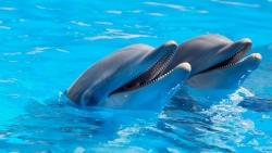 تفسير حلم الدلفين الازرق في المنام