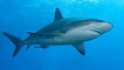 تفسير الهروب من سمك القرش في المنام