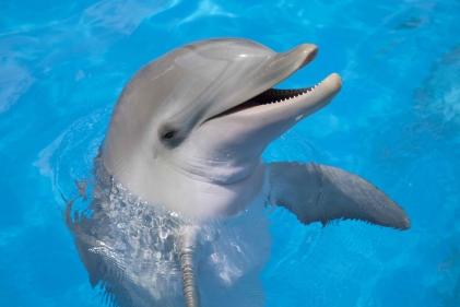 تفسير حلم اللعب مع الدلفين في المنام