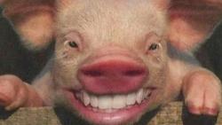 تفسير رؤية لحم الخنزير في الحلم