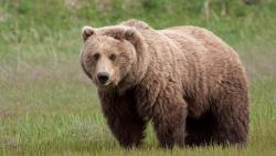 تفسير حلوم الدب الصغير في المنام