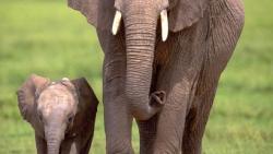 تفسير حلم خرطوم الفيل في المنام