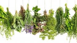 تفسير رؤية احتراق الأعشاب في المنام