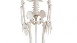 تفسير حلم عظام الساق في المنام