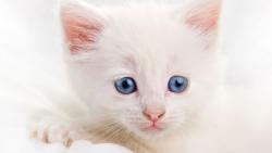 تفسير حلم قطتان متشابهتان في المنام